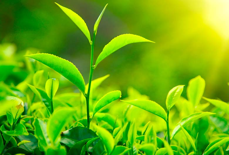 ¿Cómo plantar una planta?